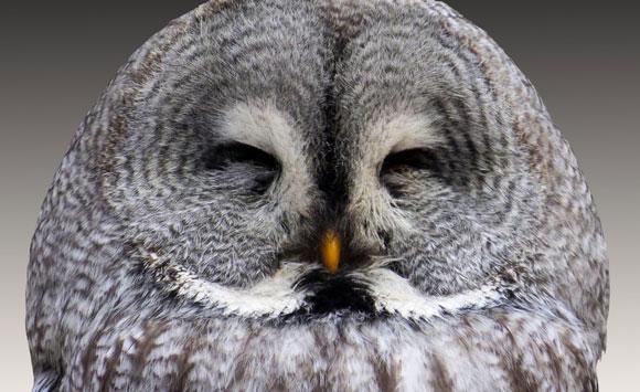 Owl_blog.jpg